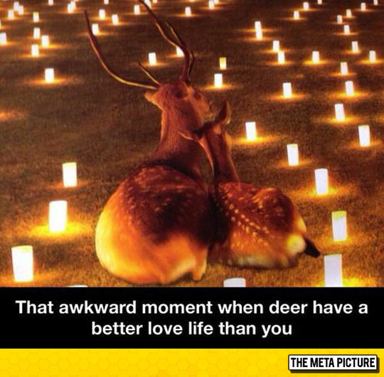 cool-deer-couple-together-candles-night