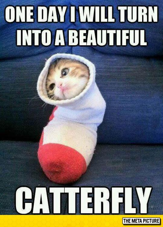 cute-cat-inside-sock-burrito
