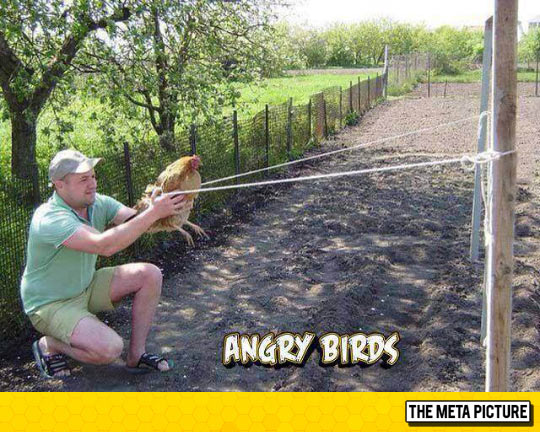 Angry Birds In The South