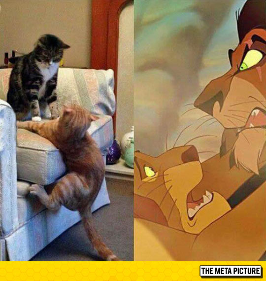 funny-Lion-King-scene-with-cats