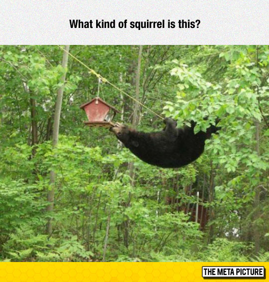 funny-bear-squirrel-house