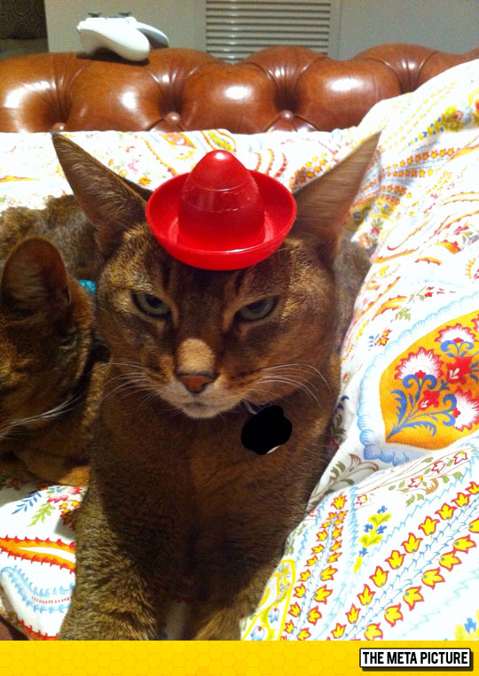 funny-cat-hat-necklace-chair-joystick
