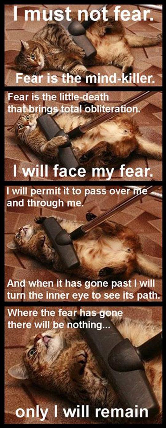 funny-cat-vacuum-facing-fear