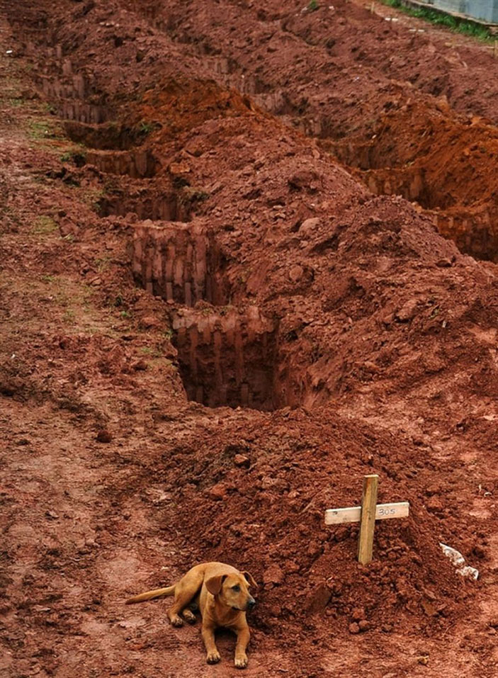 A dog sits next to the grave of its owner, who passed away in the disastrous landslides near Rio de Janeiro in 2011