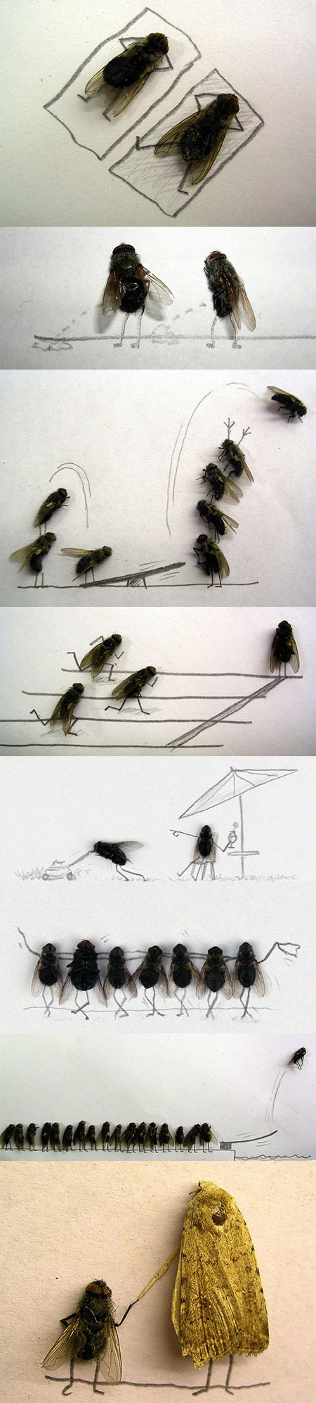 Flies, they know how to have fun