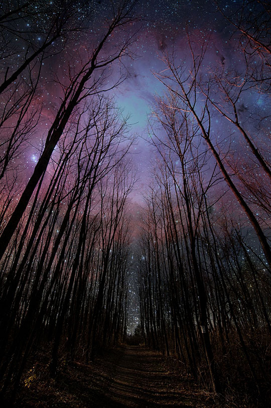 Just a nighttime stroll through the woods