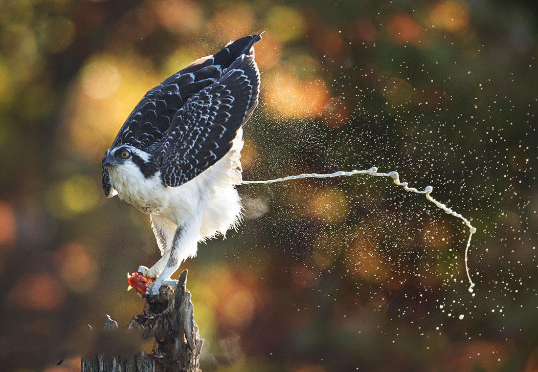 Such a beautiful high quality photograph capturing nature in action.