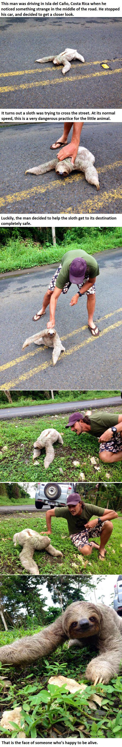 This Guy Was Driving When He Noticed Something Strange In The Road. Look At What He Found...