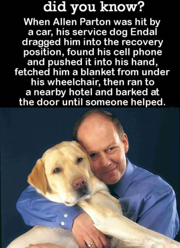 Truly, a man's best friend