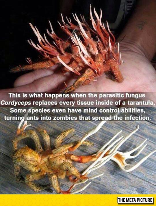 The Tarantula From Hell