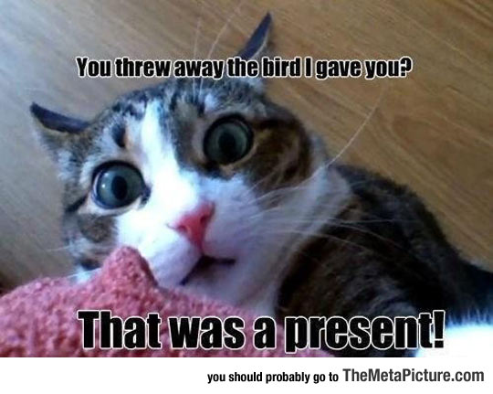 cool-angry-cat-bird-present