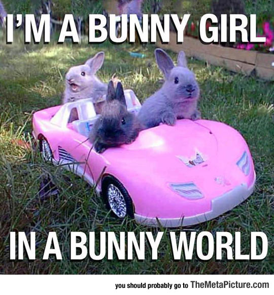 cool-bunny-little-car-pink