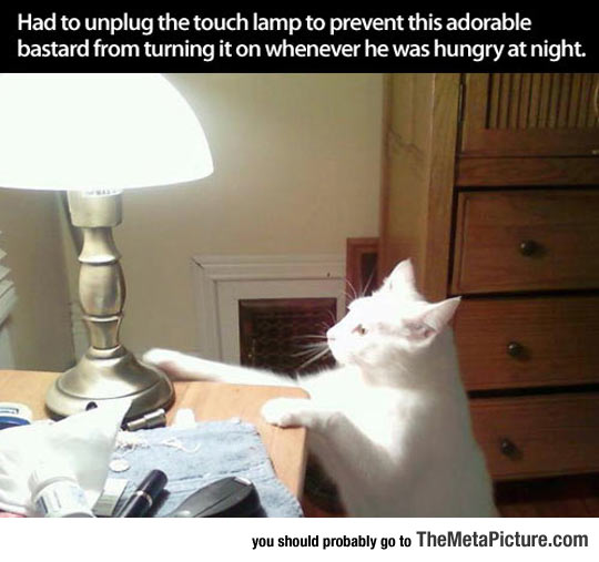 cool-cat-turning-lights-on