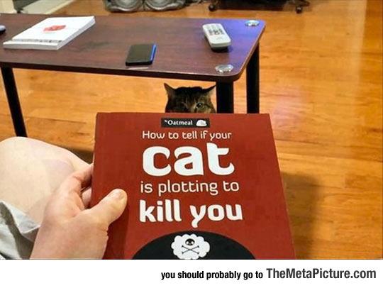 cool-kill-cat-book
