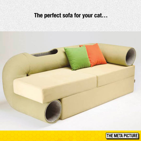 My Cat Needs This