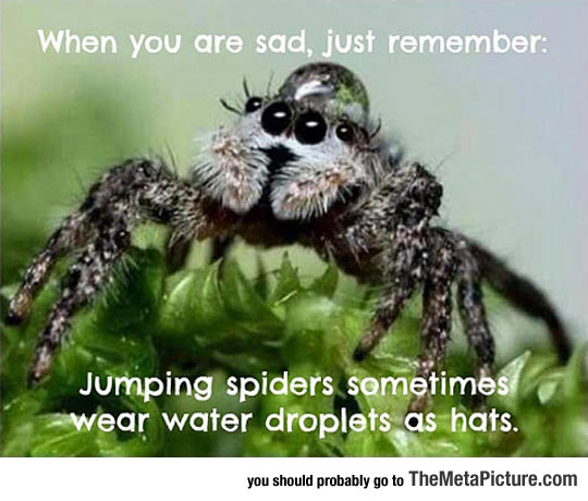 cool-spider-water-drop-hat