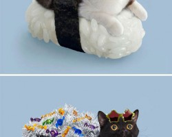 The Sushi Cats