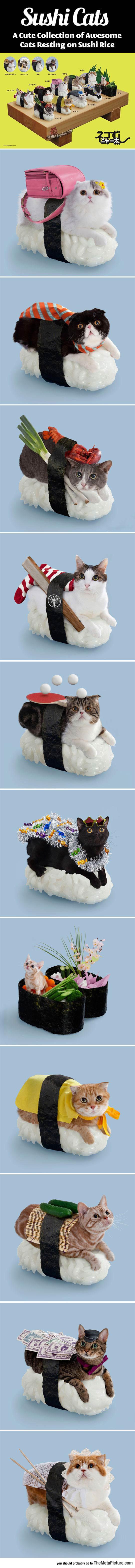 cool-sushi-cats-cute