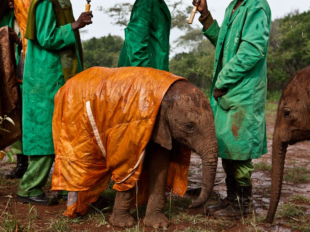 Baby elephant in a raincoat