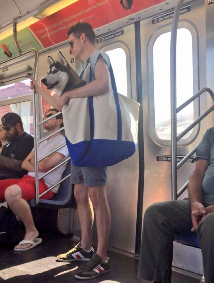 Dogs Are Not Allowed On NYC Subway Unless They're In A Carrier…So This Happened