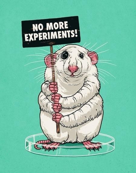 No more experiments