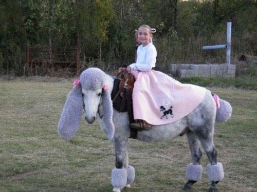 Poodle horse
