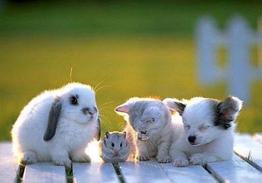 Rabbit, hamster, cat and dog