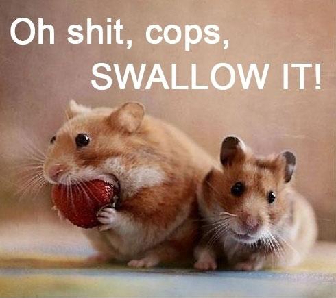 Swallow it!