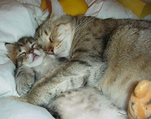 Sweet nap