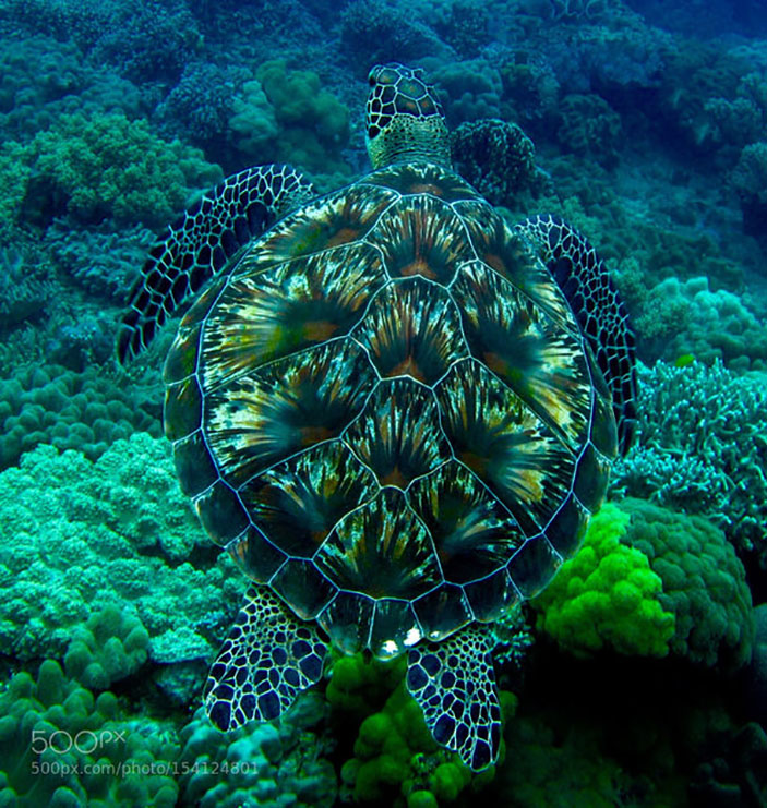 Turtle's shell looks like a fireworks display
