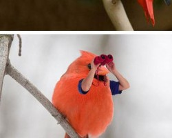 Best Of Birds With Human Arms