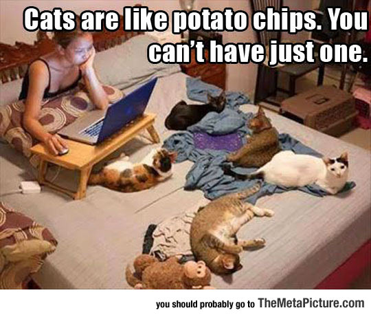Potato Chip Cats