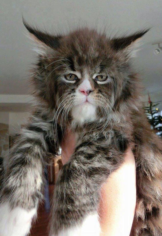 This Is The Coolest Looking Cat I