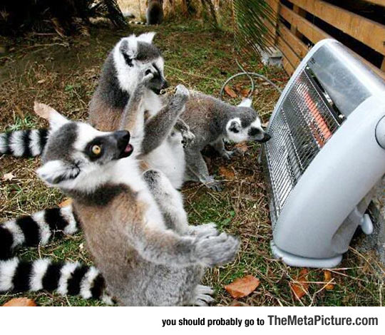 funny-lemur-group-heater