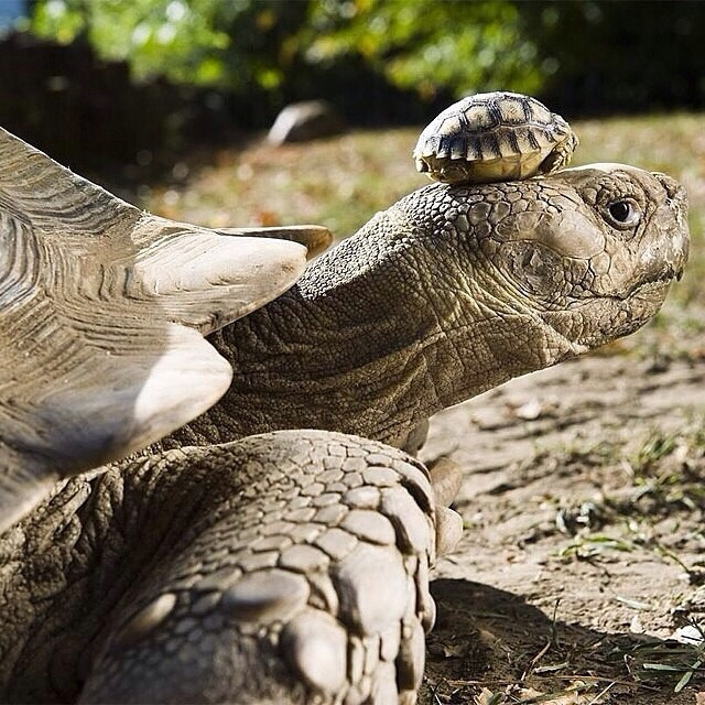 140 year-old mom with 5 year-old son.