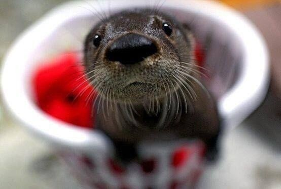 Cutest Otter I've ever seen