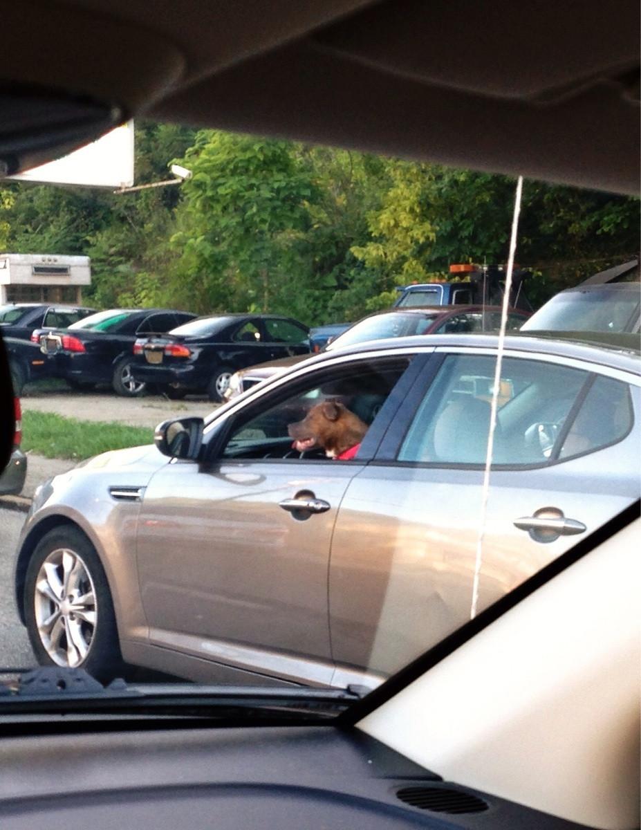 Dog in traffic
