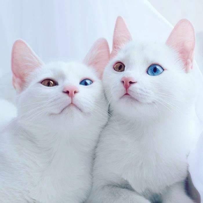 Matching eyes