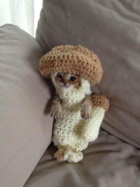 Mushroom cat.