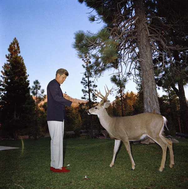 President John F. Kennedy feeds a deer at Lassen Volcanic National Park, CA, 1963