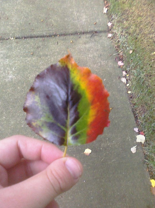 Rainbow leaf. I love Autumn