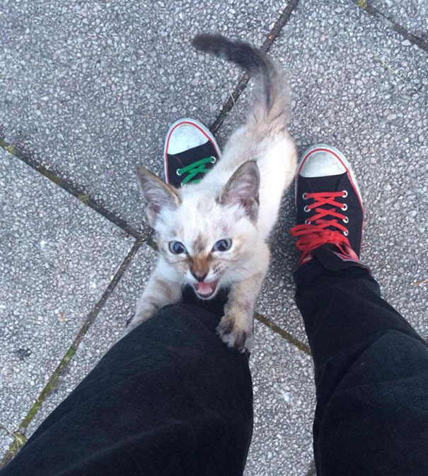 Stray kitten chooses her human in a park