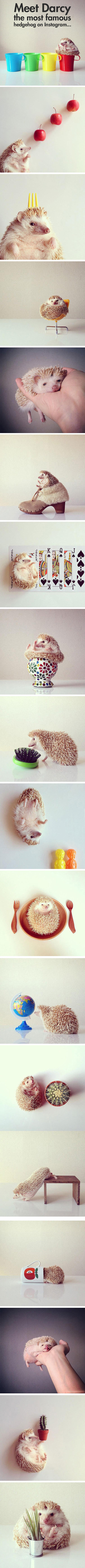 The Most Fabulous Hedgehog On The Internet