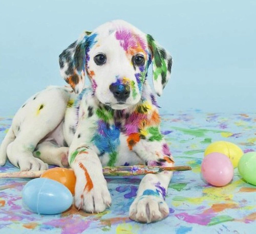 This dog is covered in paint