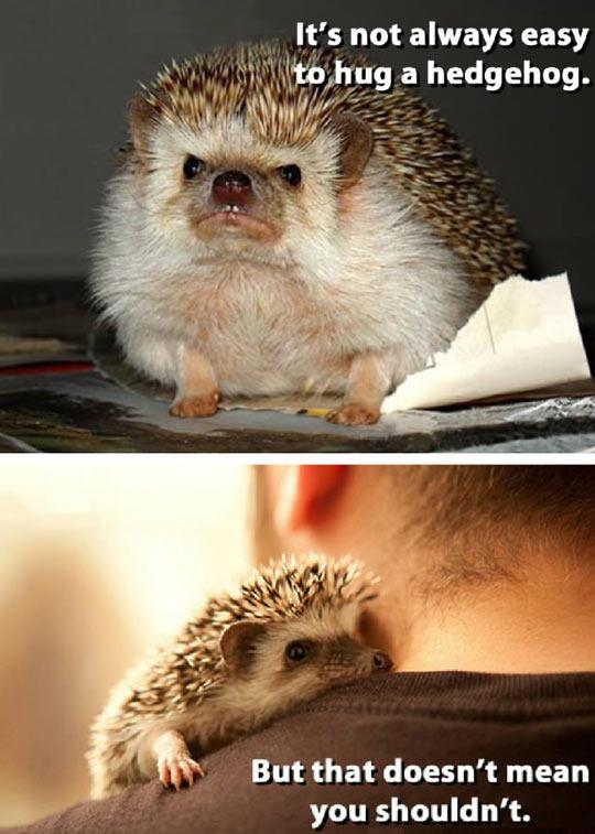 Hug A Hedgehog Today
