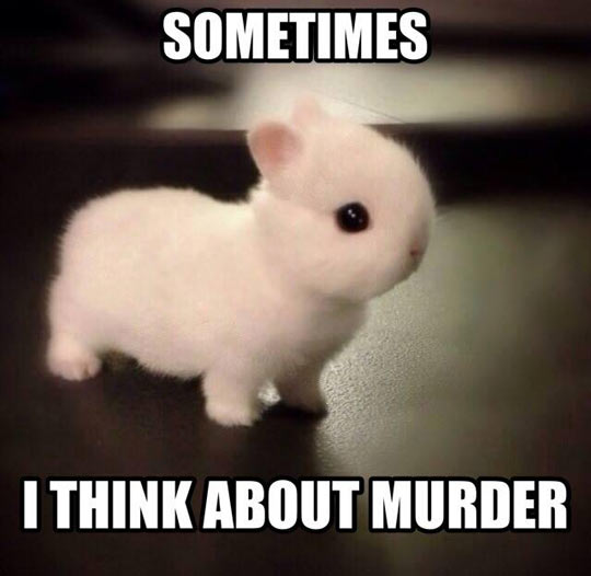 Bunnies Are Cute They Said