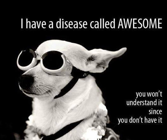 cool-sick-disease-dog-glasses-awesome