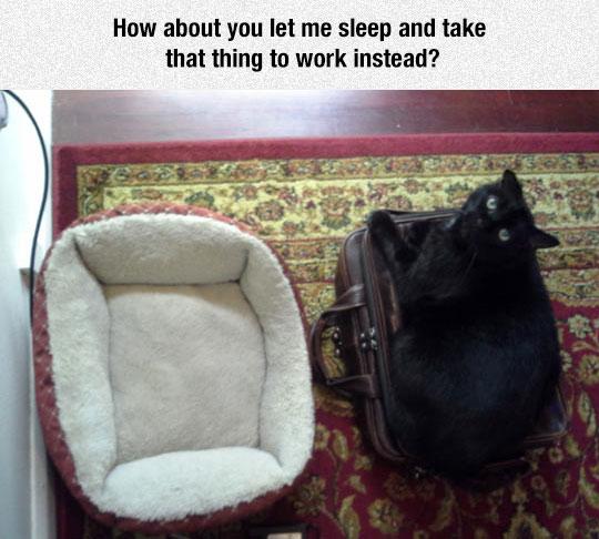 funny-cat-sleeping-briefcase