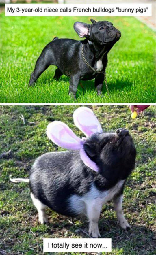 funny-french-bulldog-pig
