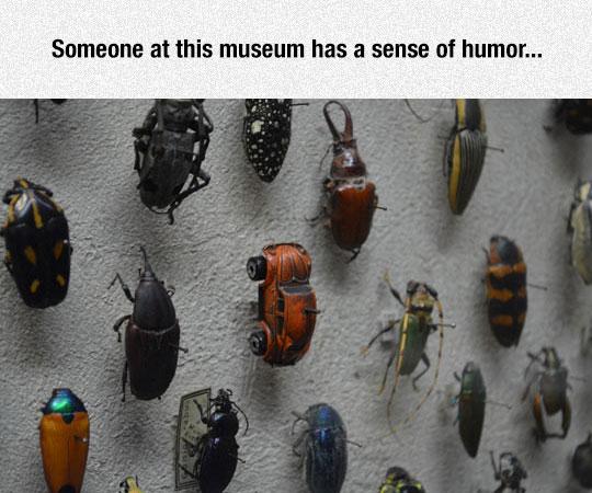 Beetle Exhibit